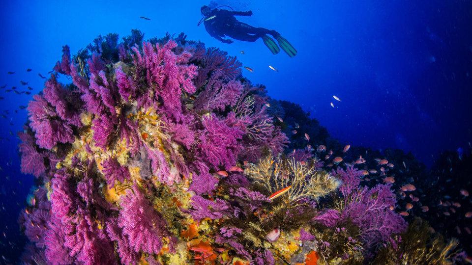 Submarinismo en Ceuta